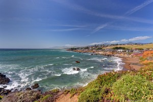Coastal Bluff Trail Wildflowers Cambria California 3