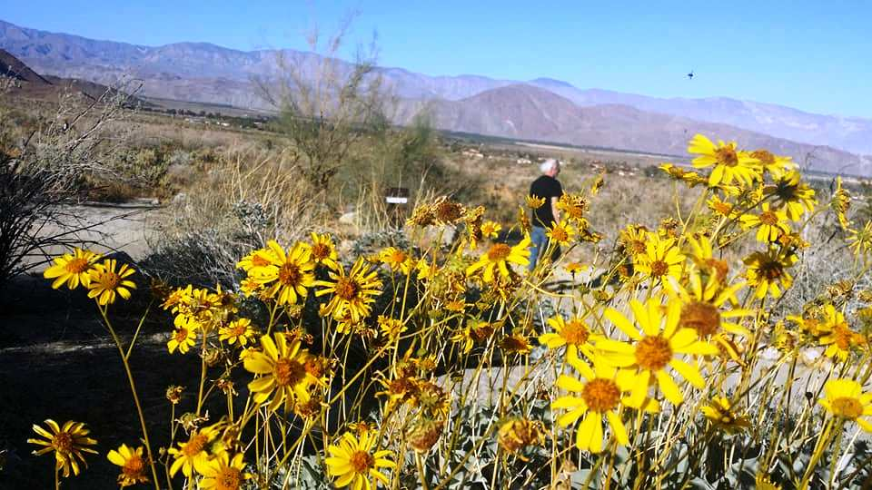 From snow to desert flowers a day in julian borrego springs from snow to desert flowers a day in julian borrego springs mightylinksfo
